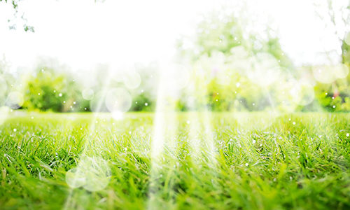 Votre pelouse peut-elle résister à la sécheresse