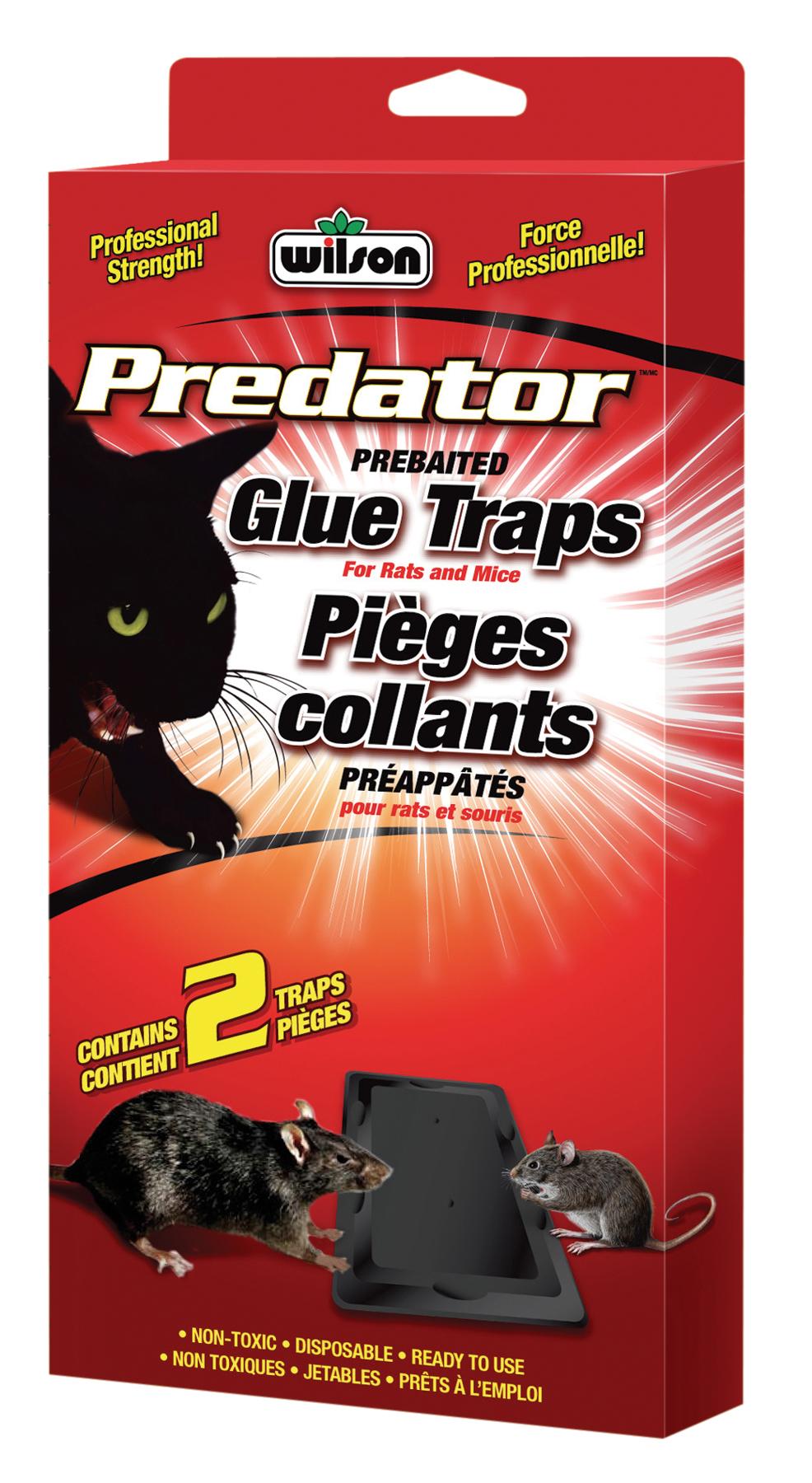 7740220 Wilson Predator Rat Glue Traps Hi Res EF
