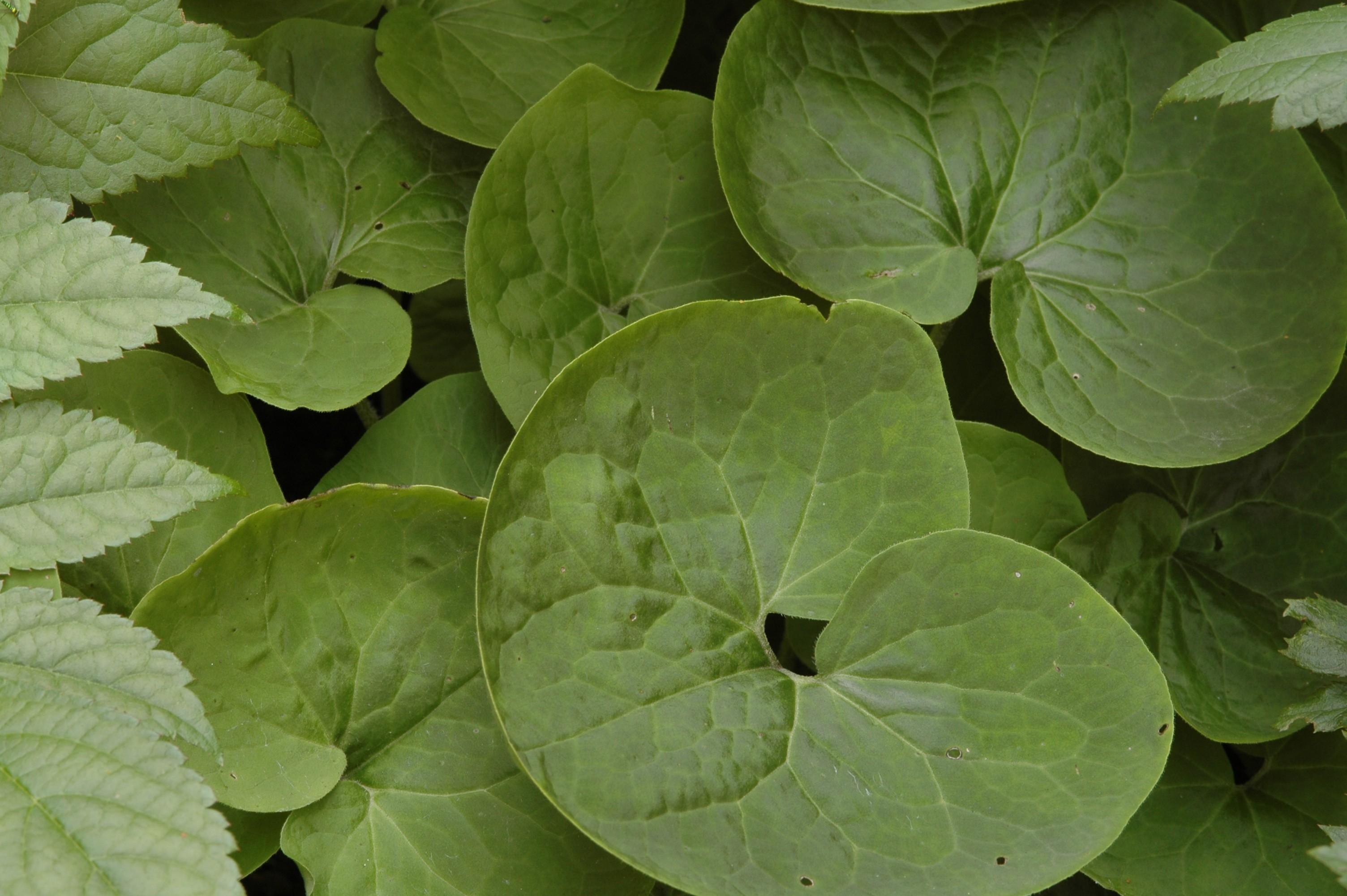 Fleurs Pour Mi Ombre des plantes indestructibles qui poussent à l'ombre dense