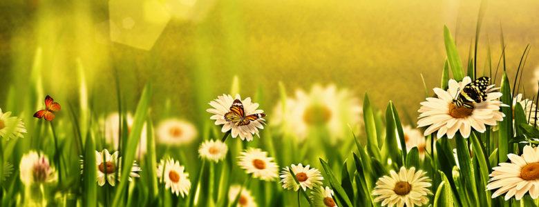 Stay Cool Gardening - Mark Cullen