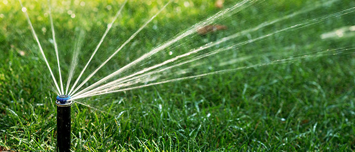 Best Tips For Overseeding Your Lawn by Owen Reeves