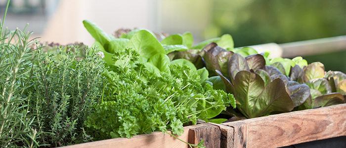 5 conseils pour jardiner dans un espace restreint