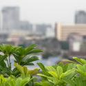 Conseils pour cultiver des légumes sur votre toit par Albert Mondor