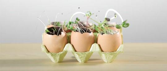 Eggshell seed starters