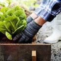 Fertilizing Edible Garden