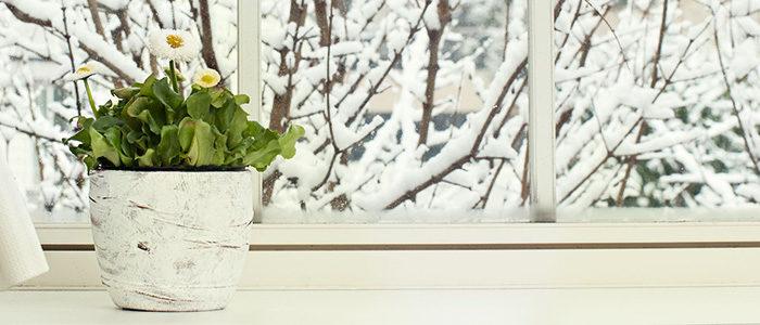 Plant near a window