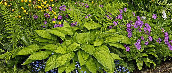 Six Hearty Perennials That Thrive in The Shade