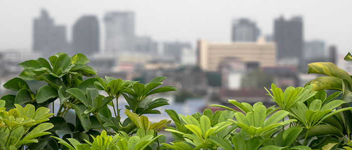 Tips For Growing Vegetables On Your Roof by Albert Mondor