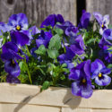 Incorporate pantone colour in your garden