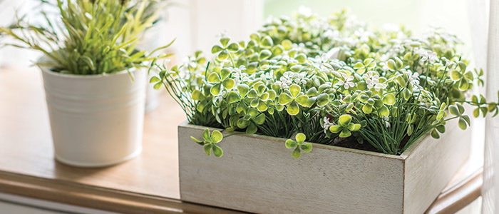 indoor plants in containers close to sunny window